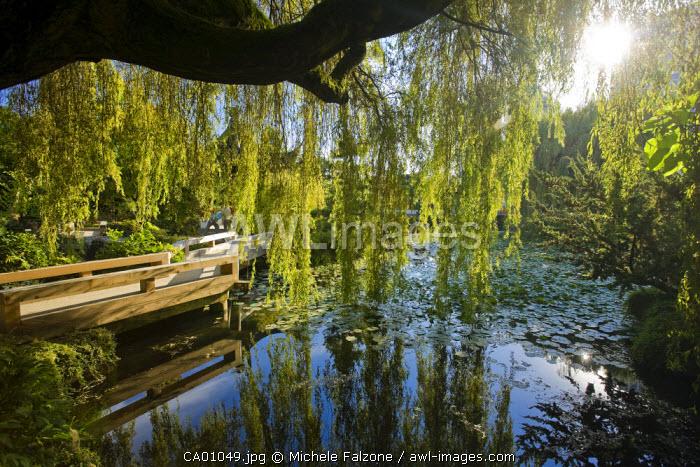 Sun-Yat-Sen Park and Gardens, Chinatown, Vancouver, British Columbia, Canada