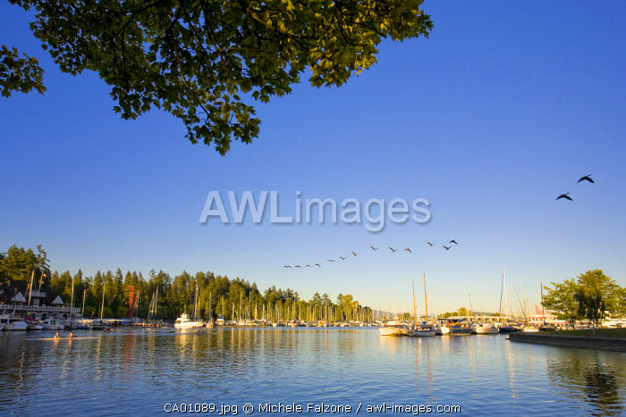 Downtown Vancouver Skyline and Coal Harbour, Vancouver, British Columbia, Canada