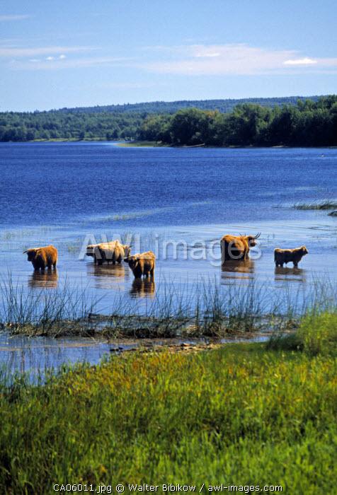 Saint John river, Gagetown, New Brunswick, Canada
