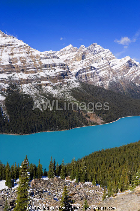 Peyto Lake, coloured by glacial silt, Banff-Jasper National Parks, Canada