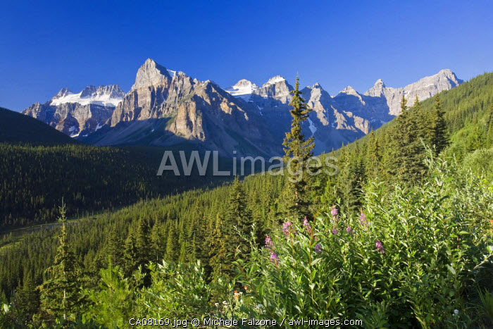 Wildflowers and Valley of 10 Peaks (Wenkchemna Peaks) at sunrise, Banff National Park, Alberta, Canada