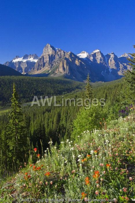 Wildflowers and Valley of 10 Peaks (Wenkchemna Peaks) at sunrise, Banff National Park, Alberta, Canada