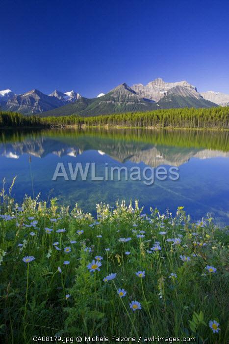 Bow Mountain Range and Herbert Lake, Banff National Park, Alberta, Canada