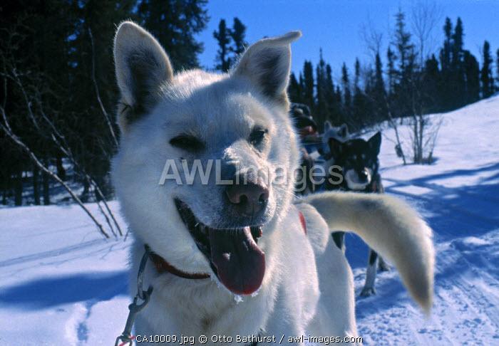 Great Slave Lake region, Northwest Territories, Canada