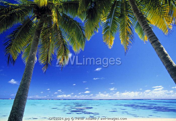Tropical Beach, North Aitutaki Island, Cook Islands