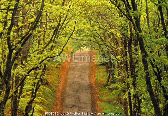 Road through woods, Burgundy, France
