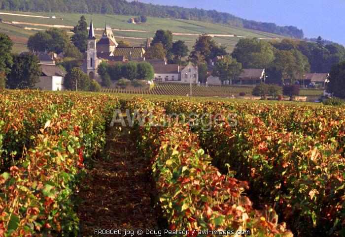 Aloxe-Corton, Cote-D'Or, Burgundy, France