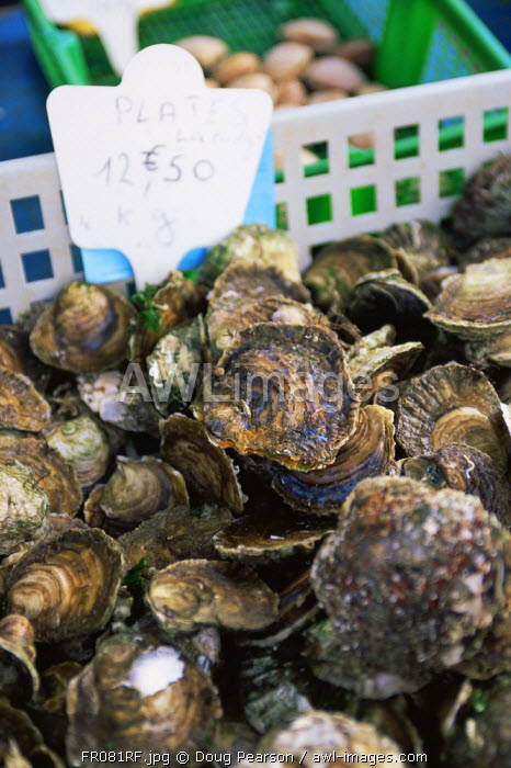 Oysters at Farmers Market, Penmarch, Finistere region, Brittany, France