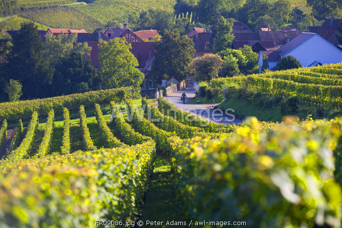 Hunawihr village and vineyards, Alsace, France