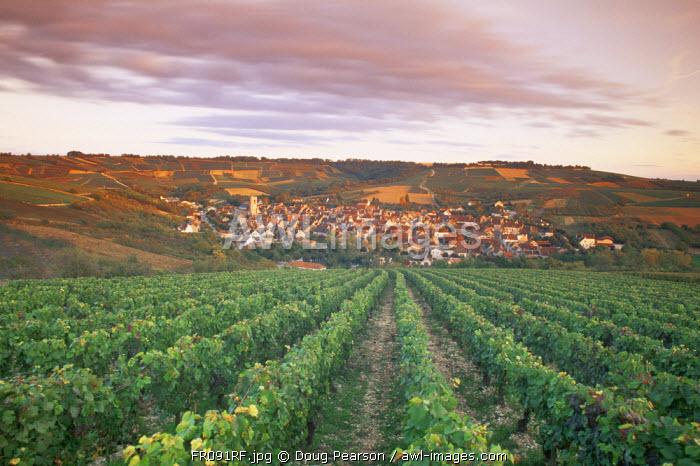 Irancy, Chablis, Burgundy, France
