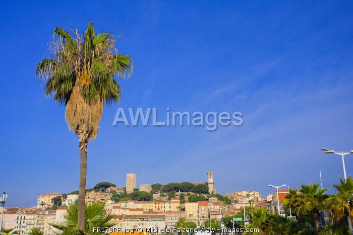 Vieux Port (Old Harbour) and old quarter of Le Suquet, Cannes, Cote D'Azur, France