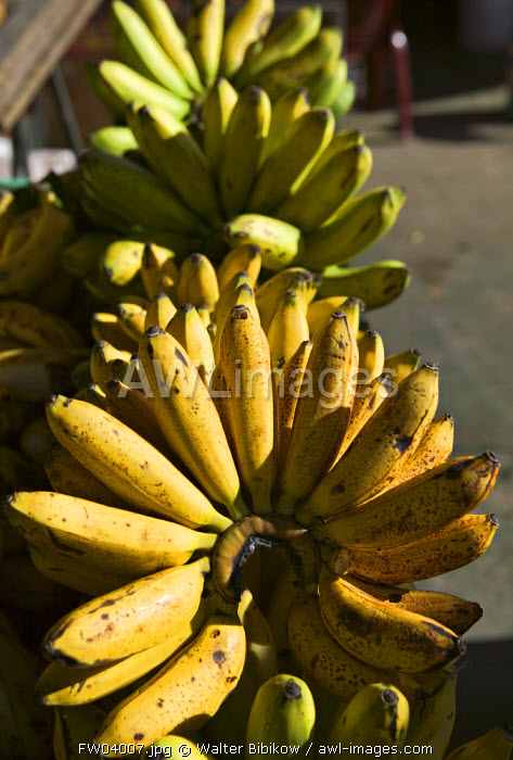 Bananas, Pointe A Pitre, Grande Terre, Guadeloupe, French West Indies