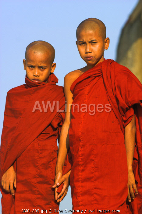 awl-images.com - Myanmar / Myanmar (Burma), Boy monks