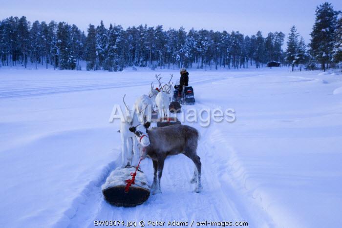 Reindeer herder, Jokkmokk, Norrbotten, Northern Sweden