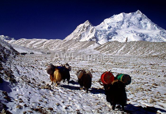 Cho Oyu, Himalayas, Tibet, China