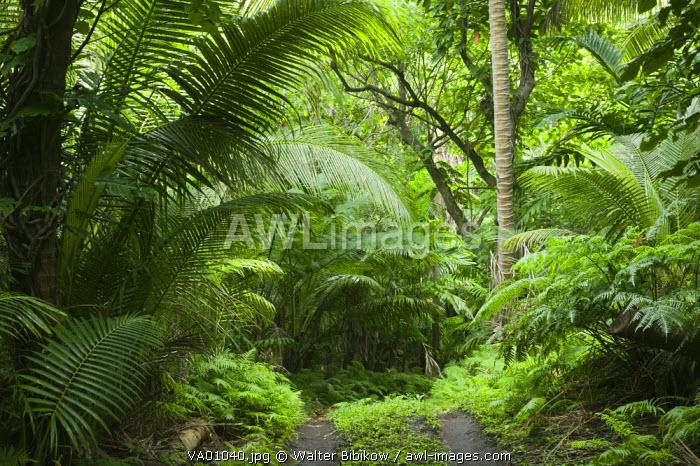 Vanuatu, Tanna Island Port Resolution, Jungle Road to Port Resolution