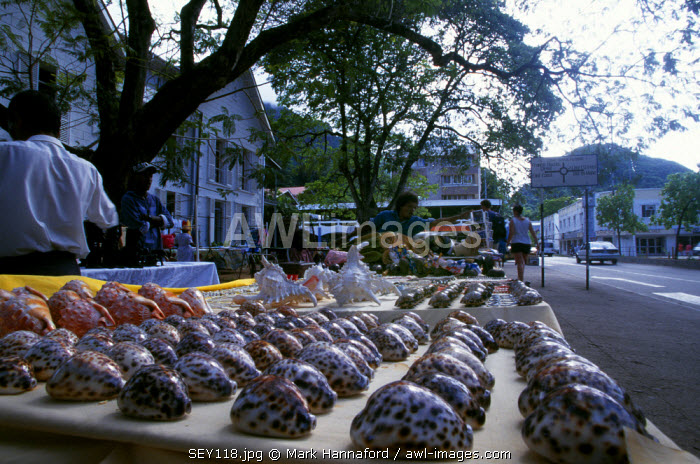 Seychelles, Mahe, Shell shop in the capital, Victoria.