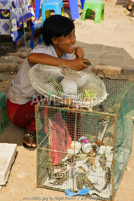 Burma, Myanmar, Yangon. A woman selling caged birds which are released into the wild on the instructions of fortune tellers to bring people's wishes true.