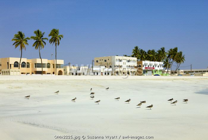 Oman, Dhofar. The deserted beachfront at Salalah in winter.