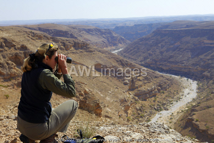 Oman, Dhofar. Scientist Tessa McGregor checks the surronding habitat during an Arabian leopard survey.