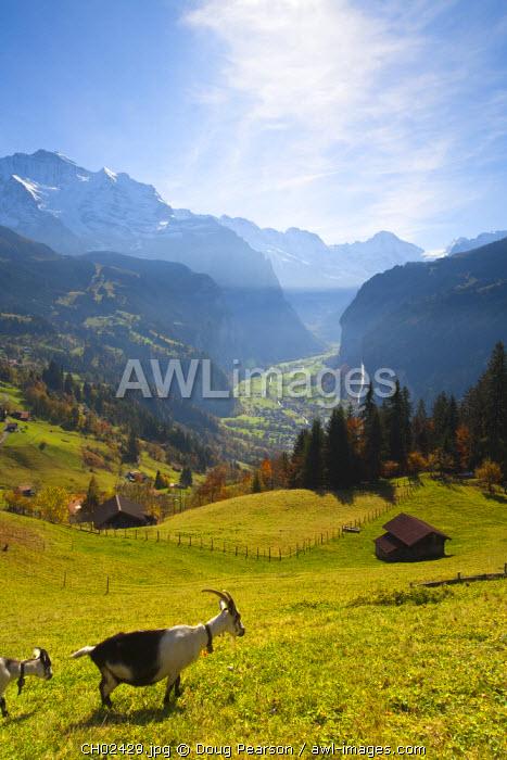 Wengen & Lauterbrunnen valley, Berner Oberland, Switzerland