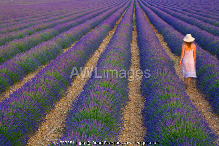 Young Woman in Lavender Field near Valensole, Provence-Alpes-Cote d'Azur, France, MR