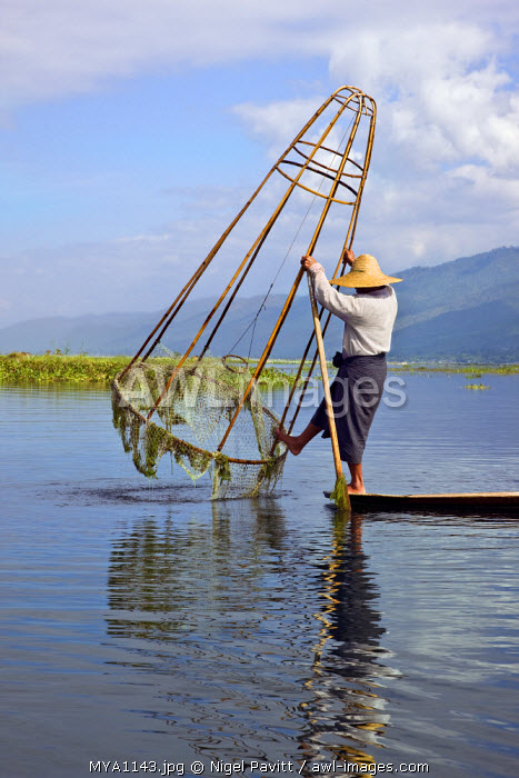 awl-images.com - Myanmar / Myanmar. Burma. Lake Inle. An Intha fisherman uses a traditional cone-shaped net stretched over a bamboo frame to catch fish in Lake Inle.