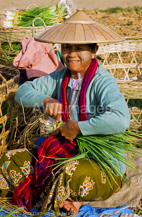 awl-images.com - Myanmar / Myanmar, Burma, Lake Inle.A woman bundles fresh spring onions at the popular Phaung Daw Oo market where all kinds of farm produce are sold.