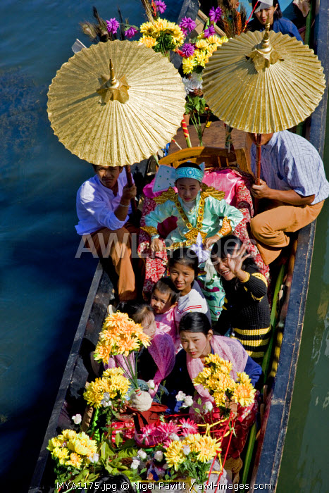 Myanmar, Burma, Lake Inle. A young novitiate shaded with golden umbrellas travels by boat during a ceremony in which the boy is inducted as a novice Buddhist monk.