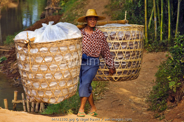 Myanmar, Burma, Lake Inle. A man brings large baskets of thin rice cakes to sell at Indein market.
