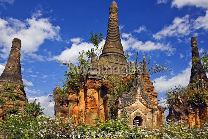 Myanmar, Burma, Lake Inle. Some of the old Buddhist shrines and stupas at the unrestored Shwe Inn Tain pagoda and monastery complex which was built in the ancient Shan style.