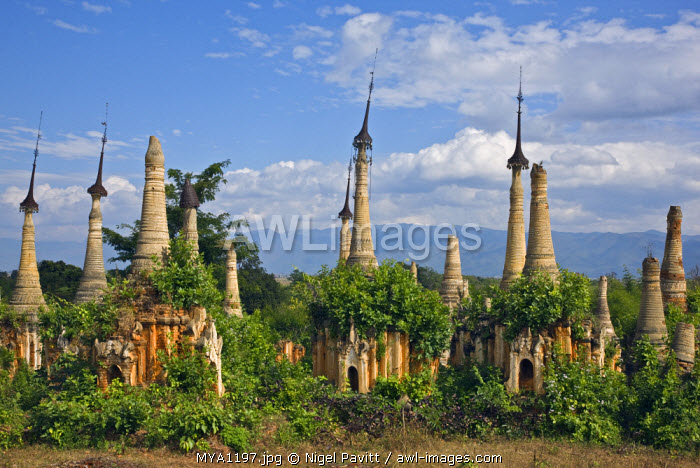 awl-images.com - Myanmar / Myanmar, Burma, Lake Inle. Ruins of old Buddhist shrines and stupas at the unrestored Shwe Inn Tain pagoda and monastery complex which was built in the ancient Shan style.