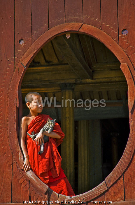 Myanmar. Burma. Nyaung-shwe. A young novice monk holding a cat at an oval window of the attractive wooden thein of the mid-19th century Shwe Yaunghwe monastery.