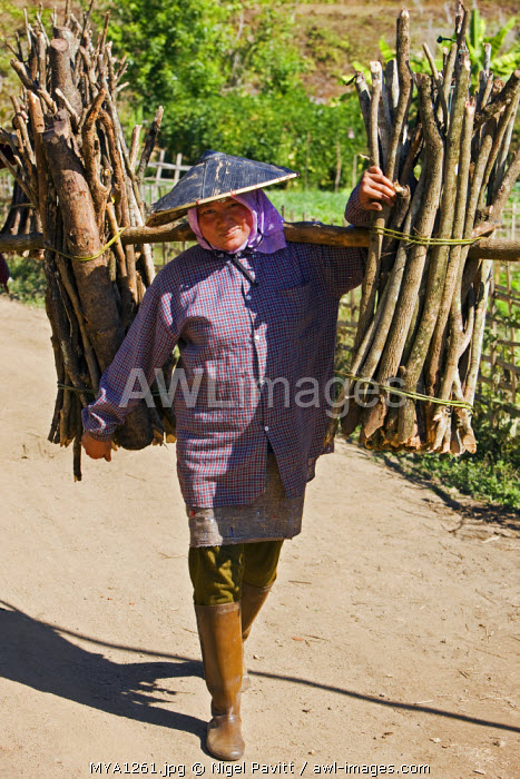 Myanmar, Burma, Pan-lo. A woman carries home a load of firewood near Pan-lo village.
