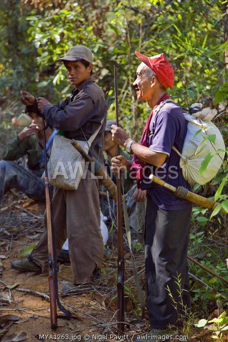 Myanmar, Burma, Pan-lo. Hunters armed with old Chinese-made muzzle loading rifles pause in the jungle near Pan-lo village before setting out to hunt wild animals.