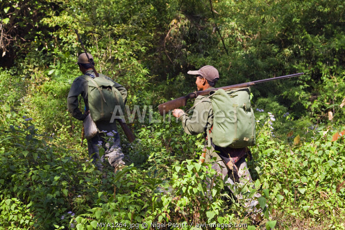 Myanmar, Burma, Pan-lo. Hunters armed with old Chinese-made muzzle loading rifles set out near Pan-lo village to hunt wild animals in the jungle.