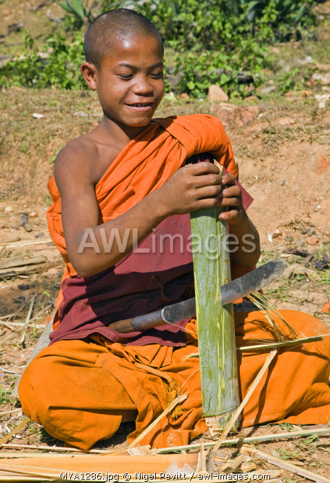 Myanmar, Burma, Wan-seeing.  A novice monk splitting bamboo to make tapers for the nearby Wan-seeing monastery.