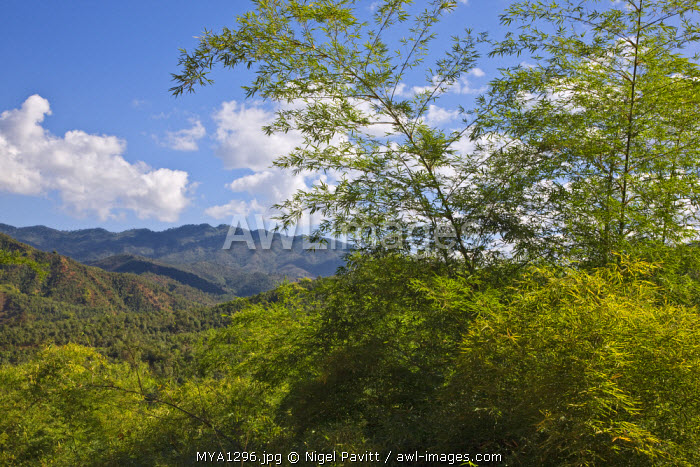 Myanmar, Burma, Kentung. A section of the Shan Mountains with bamboo growing in the foreground.