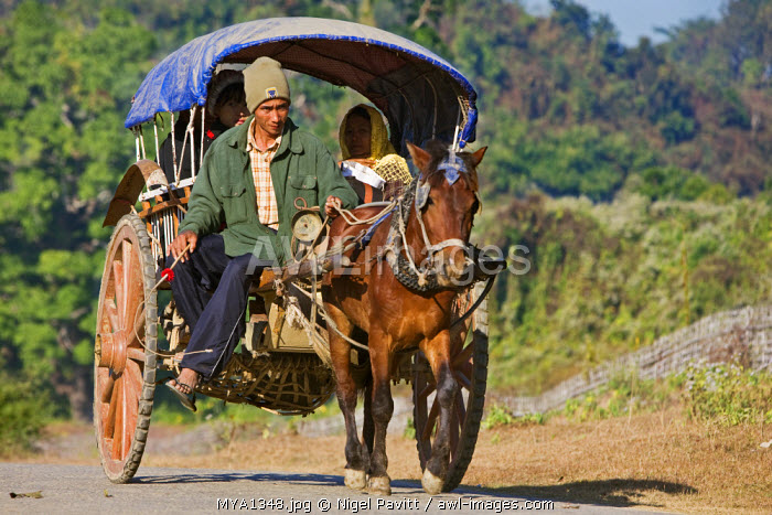 Myanmar, Burma, Mrauk U. A horse-drawn cart heading for the market near Mrauk U.