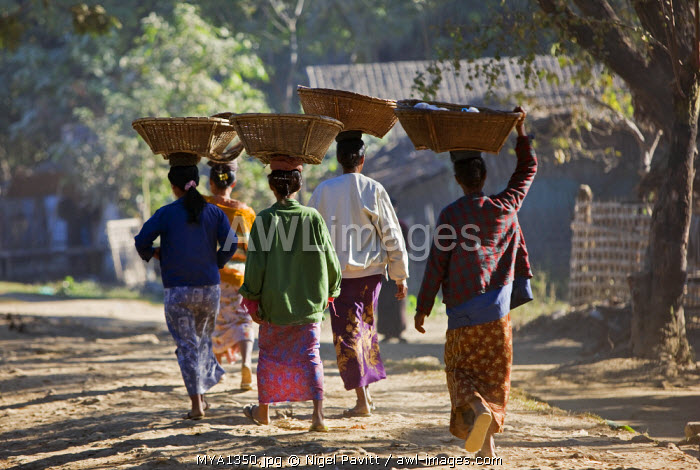 Myanmar, Burma, Mrauk U. Rakhine women return from Mrauk U market with woven bamboo baskets on their heads.