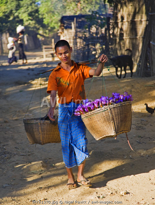 Myanmar, Burma, Mrauk U. A lotus flower seller at a village near Mrauk U.