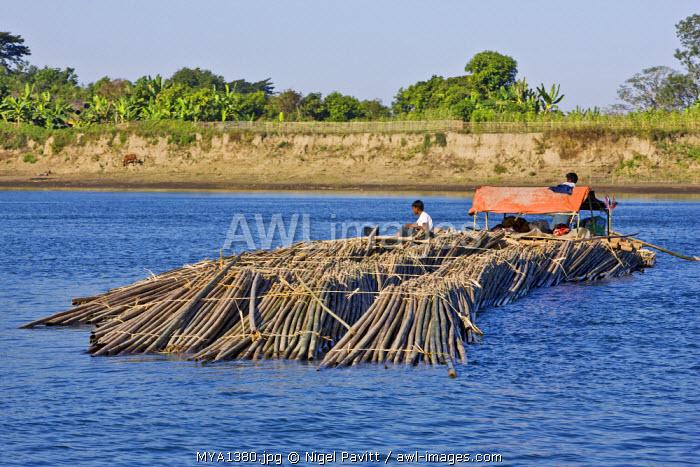 Myanmar, Burma, Lay Mro River. Floating bamboo down the Lay Myo River.
