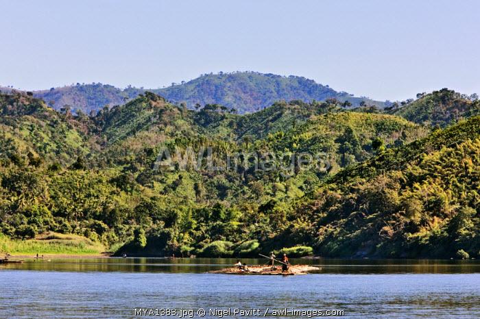 Myanmar, Burma, Lay Mro River. Floating bamboo down the picturesque Lay Myo River.