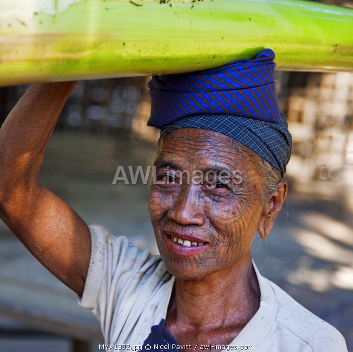 Myanmar, Chin State, Panbaung. A Chin woman with tattooed face carries home the stem of a banana tree. It was customary in the past for girls to be tattooed at 14 or 15 years old.