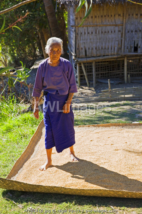 Myanmar, Burma, Rakhine State, Laung Shein. An old woman at Laung Shein village uses her feet to spread rice onto a bamboo mat for drying in the sun.