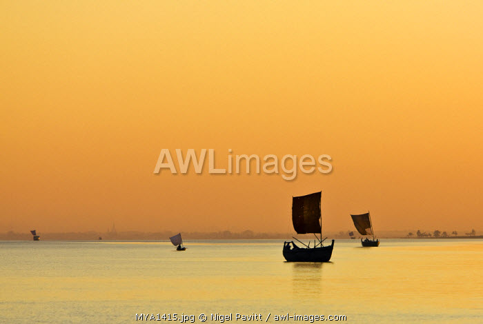 Myanmar, Burma, Rakhine State, Kaladan River. A golden sunset on the Kaladan River as numerous sailing boats head for home.