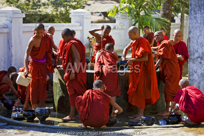 Myanmar, Burma, Rakhine State, Sittwe. Young novice monks wash their utensils at a well after their main meal at Pathain Monastery where 210 monks live.