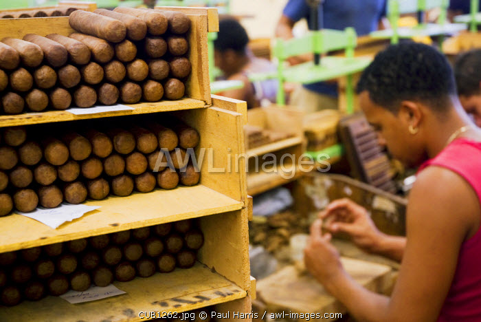 Cuba, Havana. Hand rolling cigars, The H.Upmann Cigar Factory, Havana, Cuba