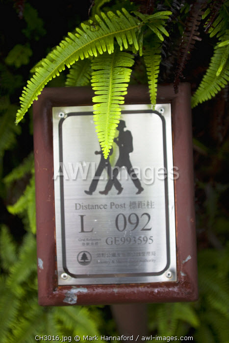 China, Hong Kong, Lantau Island.  Walking and trekking on the Lantau Trail, the footpaths are very well made and well waymarked, marked in places with individual GPS reference points for safety.