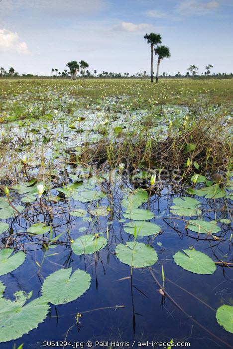 Cuba, Cienfuegos. Zapata wetlands near Cienfuegos